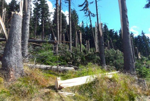 Události v lese
